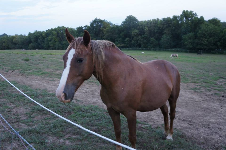 Ellie Is Looking For A Mustang Lover To Adopt Her