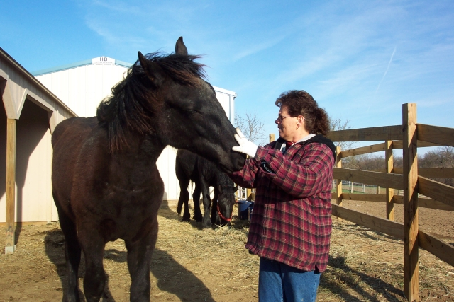 When I Arrived At Hooves & Paws Rescue Of The Heartland At Six Months Old I Was Starved, Neglected & Abused.  I Have Come A Long Way Since I Arrived But I Still Have Health & Behavior Issues.